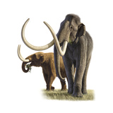 A Mammoth and a Mastodon  2008