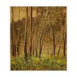 Sunlit Birches  1924