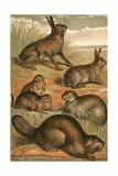 Hare  Praire Dogs  Rabbit  Marmot and Beaver