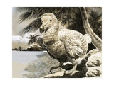 The Mystery Bird from Mauritius (The Dodo)