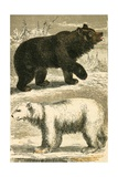 Brown Bear and Polar Bear