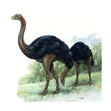Pre-Historic Birds