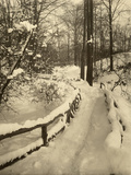 A Winter Woodland Marked with a Snow Covered Fence  USA  1916