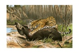 Jaguar Killing Tapir