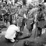 Asaro Tribespeople Performing a Ritual Exchange of Pigs and Display of Weal