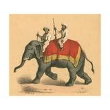Indians on an Elephant