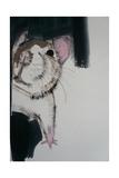 Rat  2010