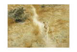 A Winter-Hare in a Landscape  1909