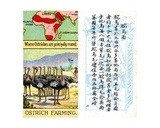 Principal Areas for Ostrich Farming  from the Series of 'Products of the World' Cigarette Cards…