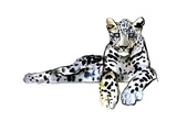 Arabian Leopard  2008