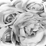 Roses, Mexico City, 1924 Papier Photo par Tina Modotti