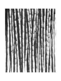 Sugar Cane  Mexico  1929