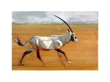 Galloping Oryx  2010