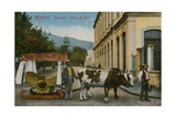 Ox Cart in Madeira Postcard Sent in 1913