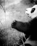 Panda Play  2011