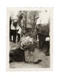 Lion Tué À La Mission de Luashi  c1940