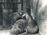 Common Hippos Jean and Jimmy with Keeper Ernie Bowman  at ZSL London Zoo  March 1927