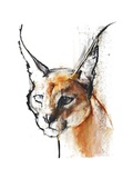 Feline (Arabian Caracal)  2009