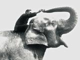 Man Riding an Elephant  June 1922