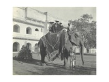 Lilah Wingfield  Arthur Brodrick  Judy Smith and Sylvia Brooke on the Maharaja of Jaipur's State…