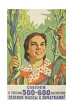 Let Us Harvest 500-600 Metric Centners of Corn Cobs on Each Hectare  1959