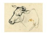 Cow  1940s
