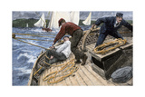 Yachtsman Tangled in the Rigging to the Mainsail  1890s