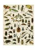 Insects  Including Beetles