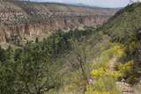 Trail Into Frijoles Canyon  Bandelier National Monument  New Mexico