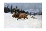 Bull Moose Pursued by Wolves Through a Snowy Landscape