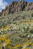 Mexican Poppies and Other Chihuahuan Desert Plants in the Little Florida Mountains  New Mexico
