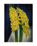 Daffodils  1954
