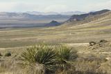 Chihuahuan Desert Landscape Looking north From the Florida Mountains  Southern New Mexico