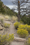 Trail Out of Frijoles Canyon  Bandelier National Monument  New Mexico