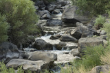 Rio Del Pueblo Tumbling Over Basalt Boulders near the Rio Grande  New Mexico