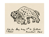 Sketch of An American Bison Made About 1599 During Onate's Expedition