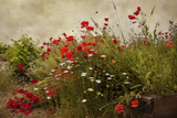 Poppy Garden Reproduction d'art par David Winston