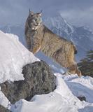 Austere Ascent (Lynx)