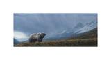 Stormwatch - Grizzly (detail) Giclée par Terry Isaac