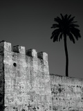 Castle Wall and Palm