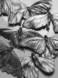 Silvery Moths