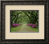 A Beautiful Pathway Lined with Trees and Purple Azaleas