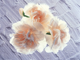 Three Azalea Blooms Resting on White Plaster Background