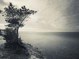 Panga Cliff  Kuressaare  Saaremaa Island  Estonia