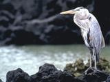 Bird Galapagos Is Ecuador