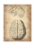 Vintage Brain Anatomy