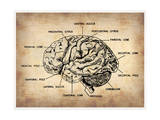 Vintage Brain Map Anatomy