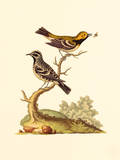 Country Birds I