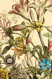 Furber Flowers III - Detail