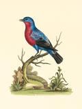 Country Birds IV